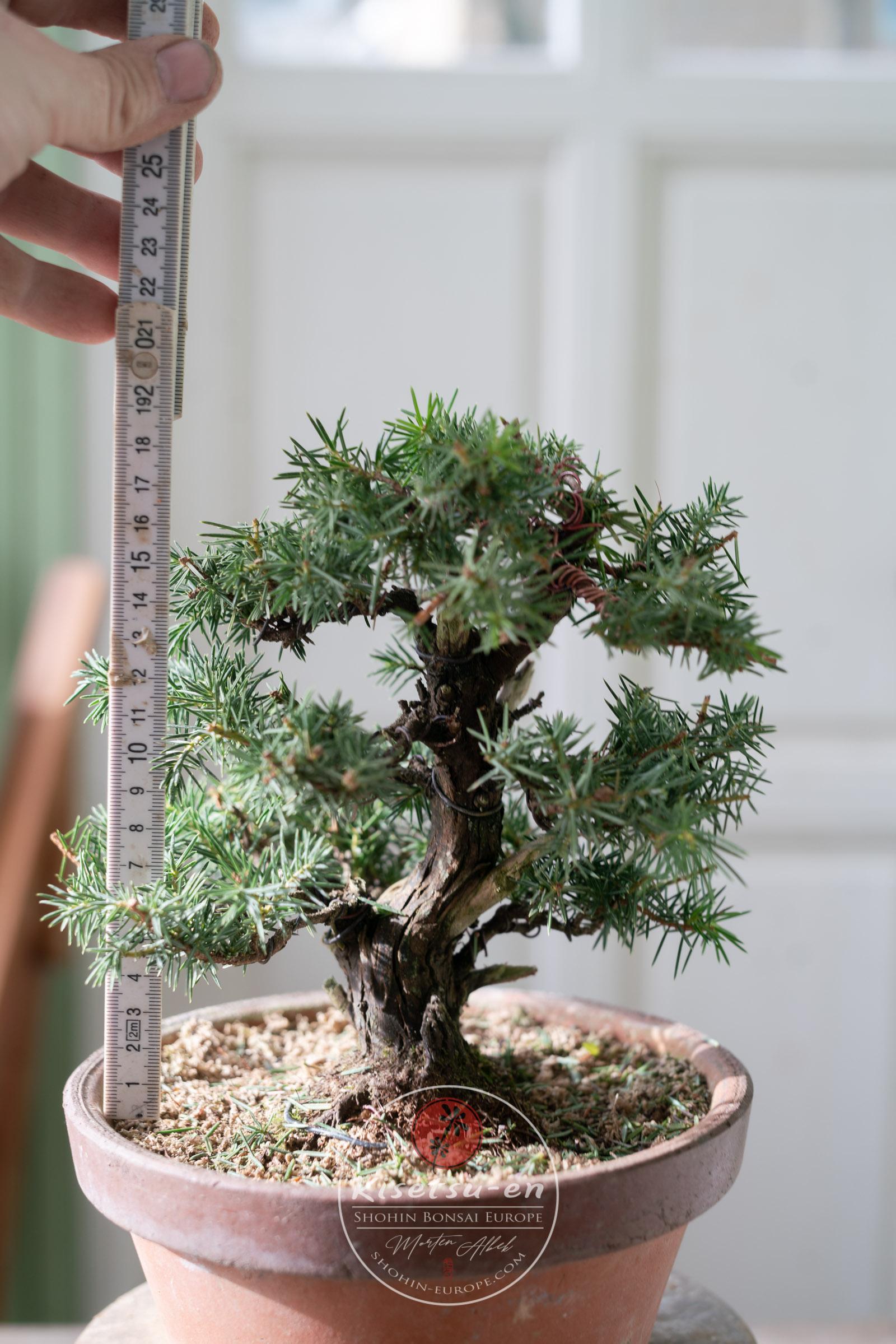 Repotting Season Has Started Kisetsu En Shohin Bonsai Europe