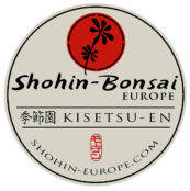 Shohin Bonsai Europe